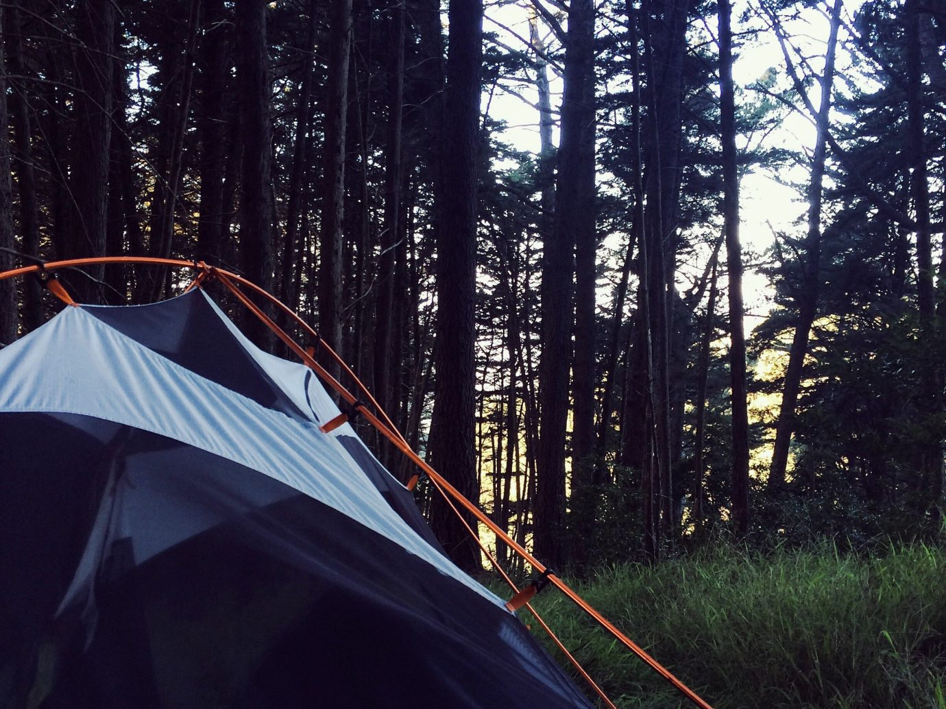 Trip Ideas tree outdoor tent season Winter sunlight vehicle outdoor object Forest day
