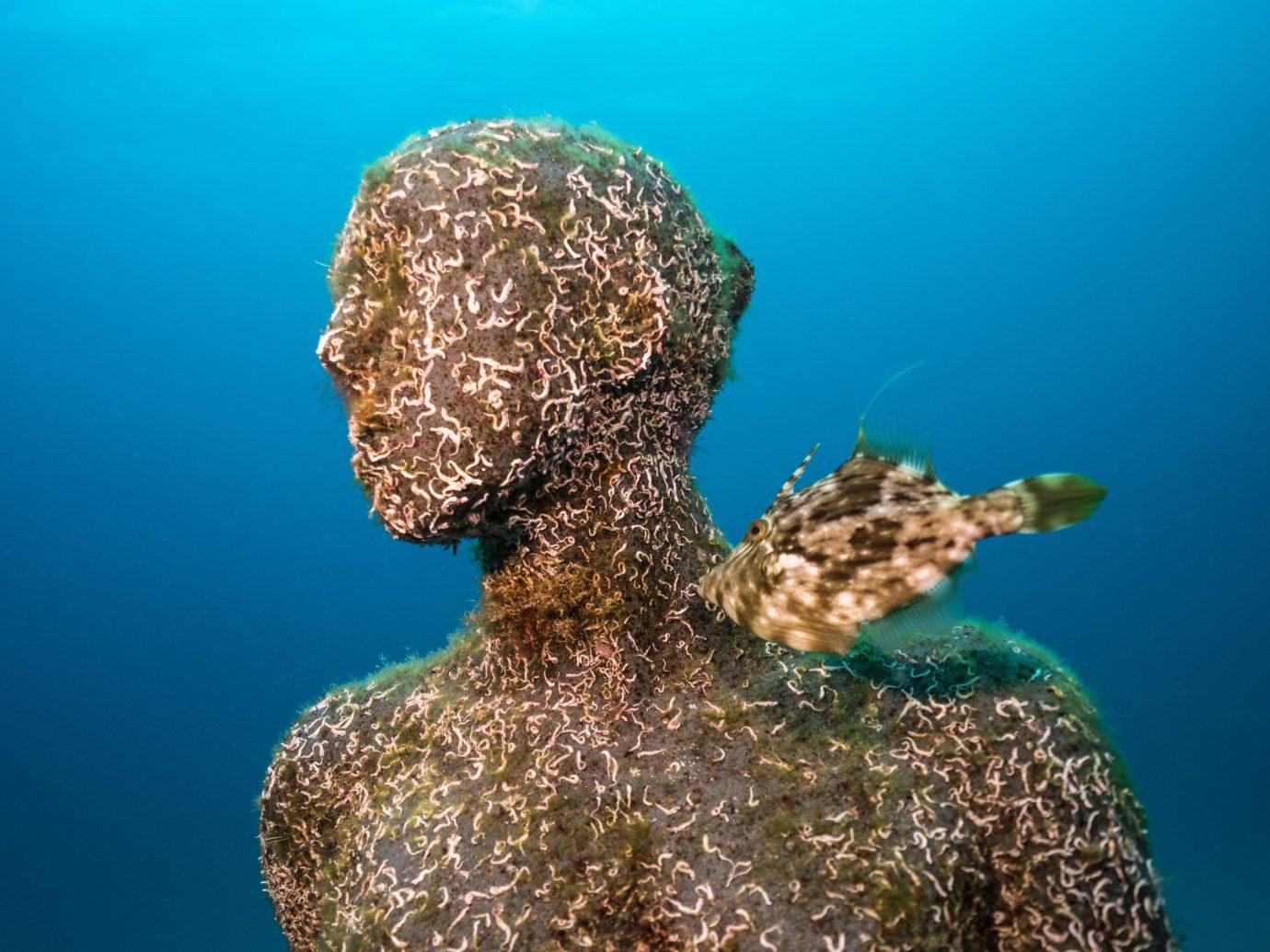 Arts + Culture Offbeat Scuba Diving + Snorkeling Trip Ideas outdoor reef underwater marine biology coral reef biology coral turtle Sea Ocean fish diving blue ocean floor