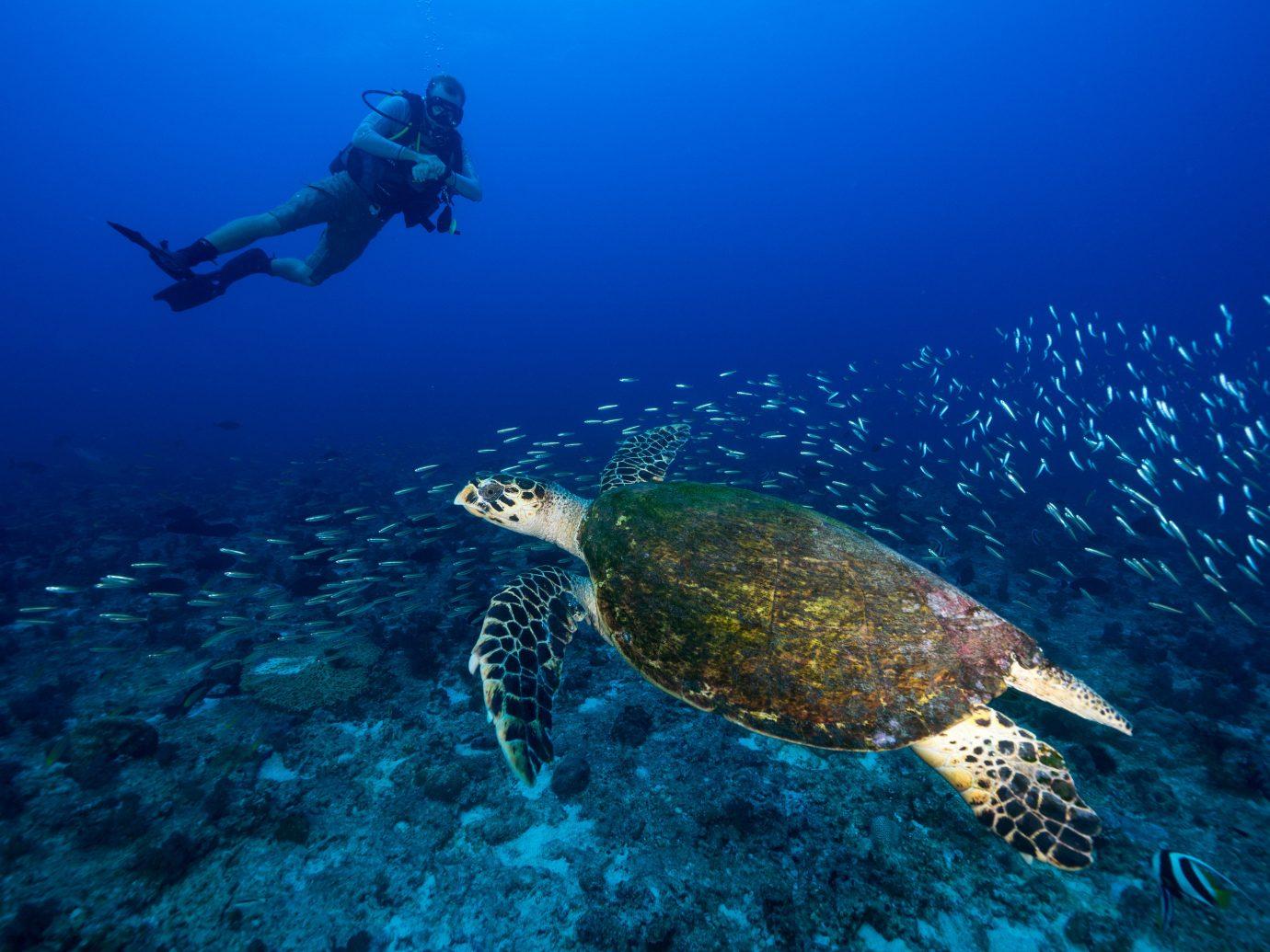 Luxury Travel Trip Ideas reptile sea turtle loggerhead marine biology turtle ecosystem underwater water animal Sea organism coral reef reef divemaster underwater diving Scuba Diving coral aquanaut Ocean tortoise blue ocean floor