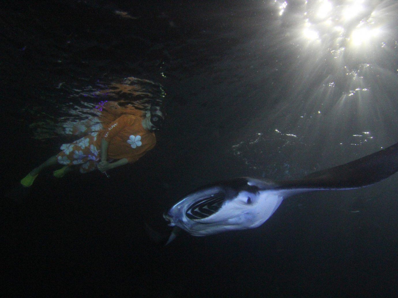Scuba Diving + Snorkeling Trip Ideas marine biology underwater biology fish deep sea fish reef dark