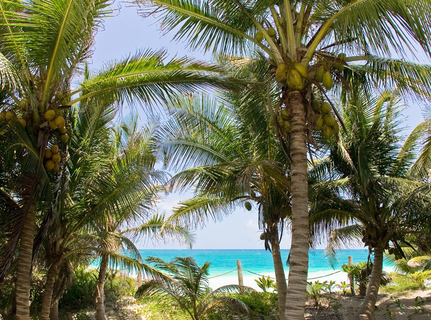 Beachfront City Grounds Island Mexico Trip Ideas Tulum Waterfront tree palm outdoor plant Beach water Ocean palm family vegetation botany tropics arecales vacation land plant date palm Resort shade borassus flabellifer produce sandy caribbean Jungle lined flowering plant