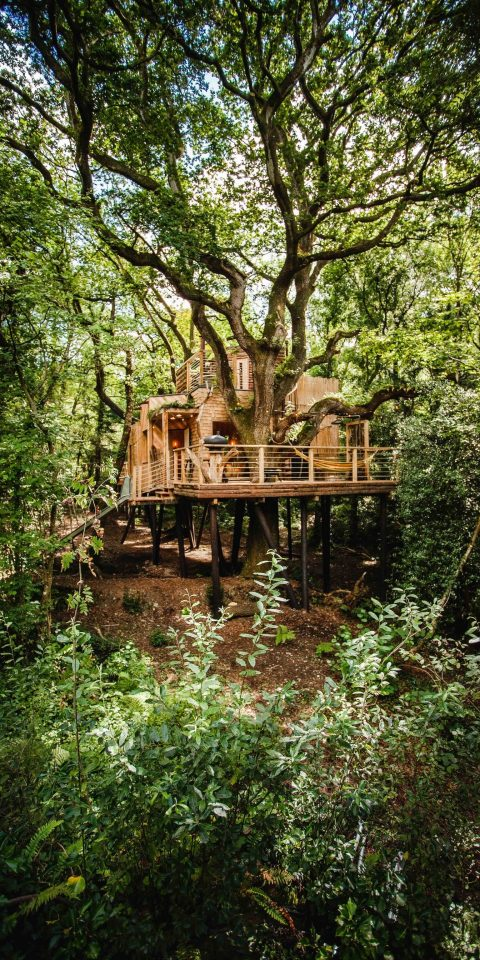 Glamping Outdoors + Adventure tree Trip Ideas outdoor Nature vegetation plant reflection nature reserve woodland leaf park water Forest outdoor structure Jungle bayou old growth forest grove house landscape grass wooded surrounded bushes wood area