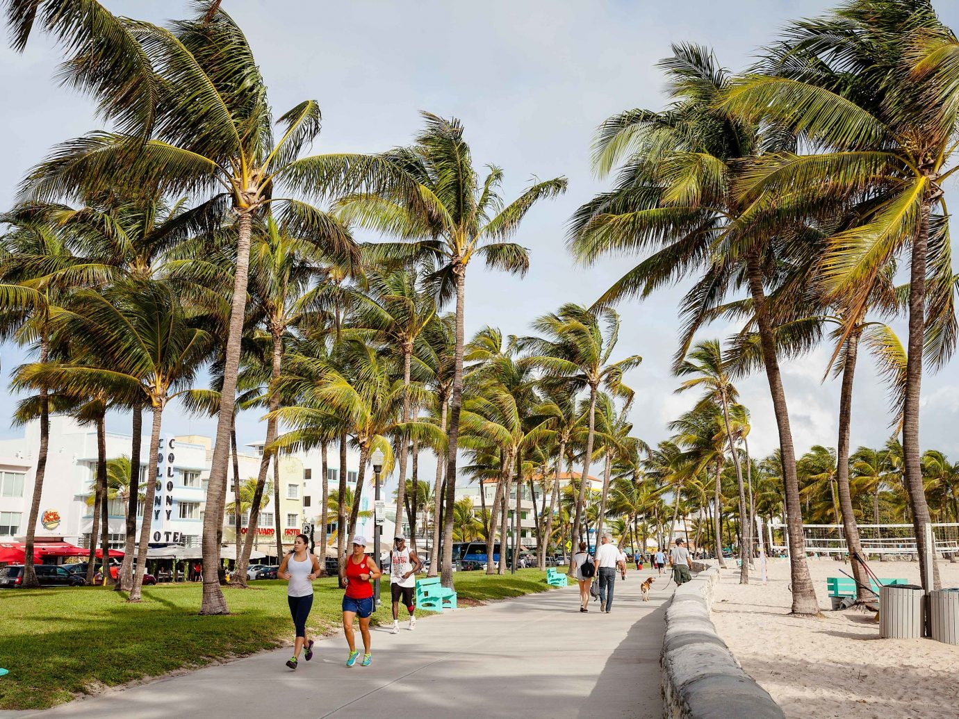 East Coast USA Trip Ideas tree palm tree woody plant arecales plant Resort sky water Beach vacation tropics leisure tourism walkway boardwalk recreation real estate City