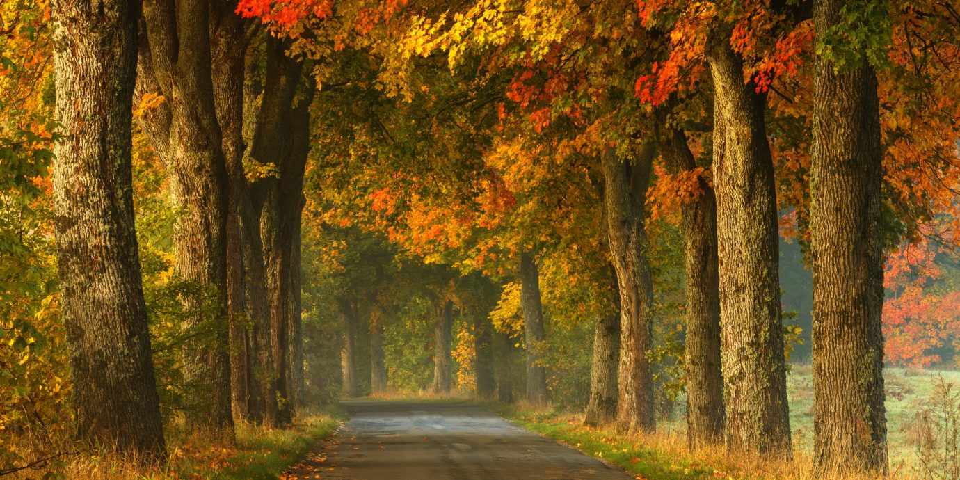 Trip Ideas tree grass habitat Nature outdoor atmospheric phenomenon autumn natural environment season woodland Forest leaf plant morning woody plant sunlight temperate broadleaf and mixed forest deciduous grove
