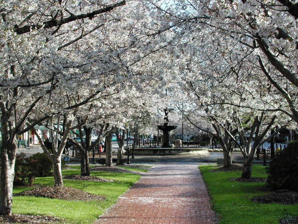 Offbeat tree grass outdoor flower plant park cherry blossom blossom botany spring
