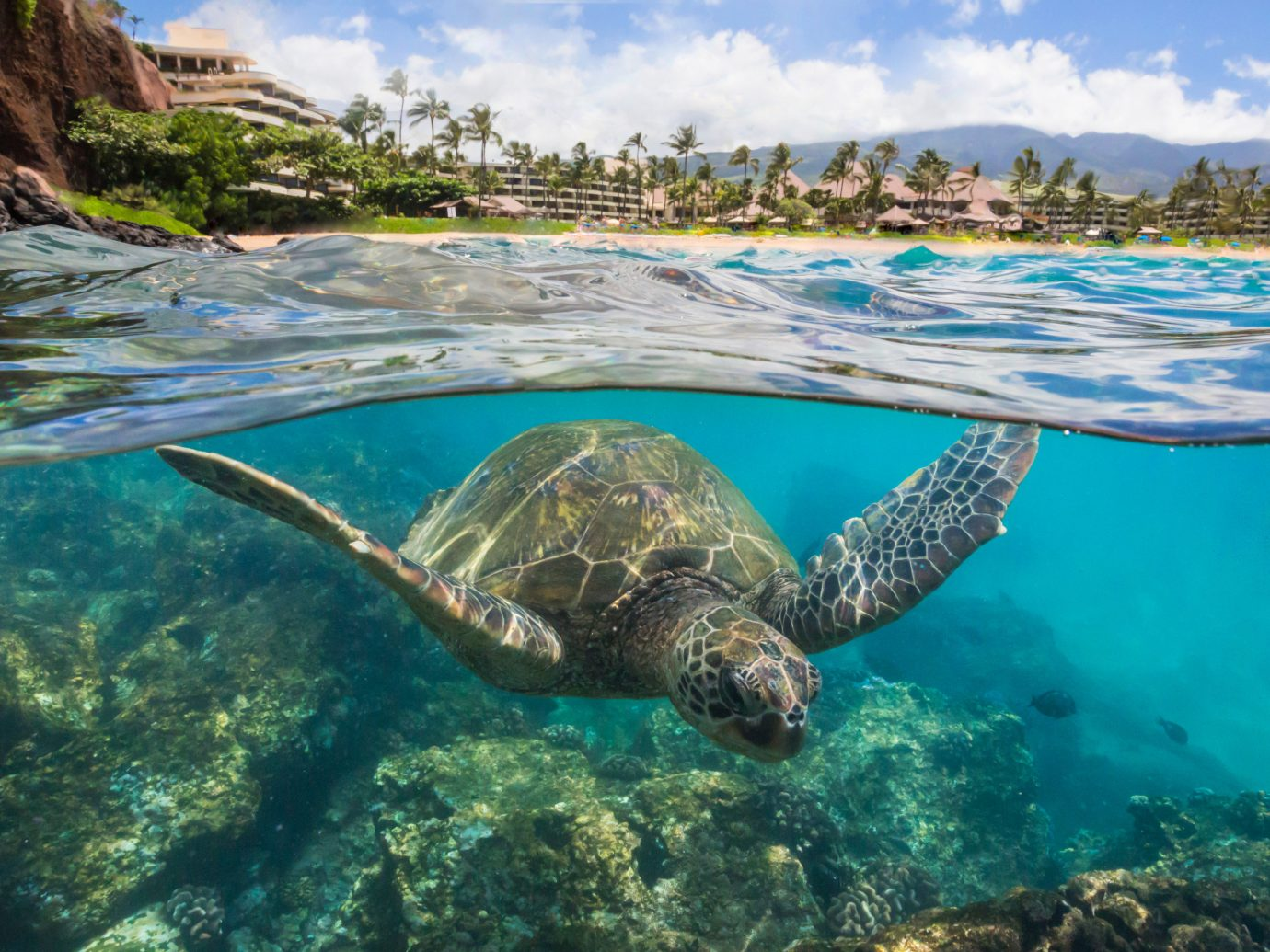 Jetsetter Guides water sky outdoor turtle sea turtle reptile marine biology fauna Sea biology Ocean Pool loggerhead coral reef tropics swimming
