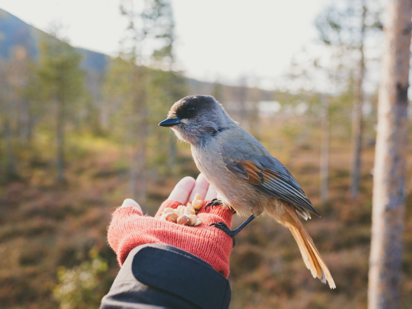 Travel Tips outdoor tree Bird sky Nature perched vertebrate Wildlife fauna jay perching bird oscine crow like bird