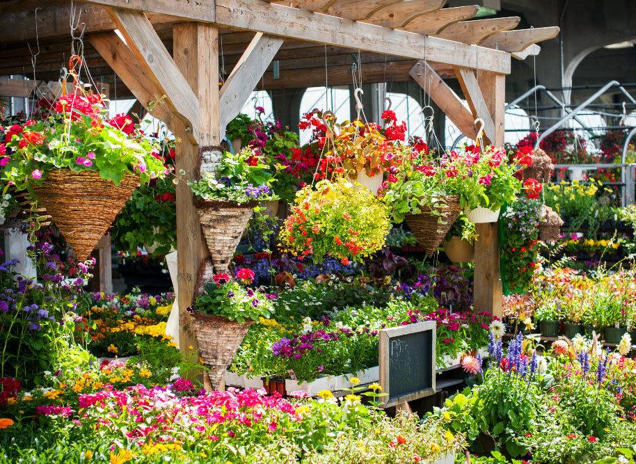 Trip Ideas flower outdoor floristry flora Garden botany plant flower arranging yard backyard outdoor structure floral design annual plant botanical garden colorful