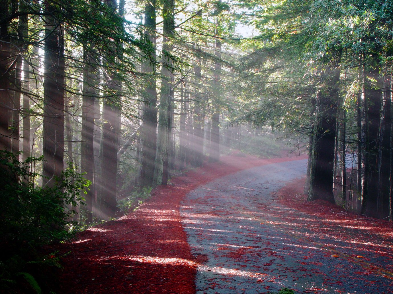 Trip Ideas tree habitat Nature Forest atmospheric phenomenon natural environment outdoor woodland season sunlight morning leaf autumn woody plant wooded trail plant sprinkler system wood dirt