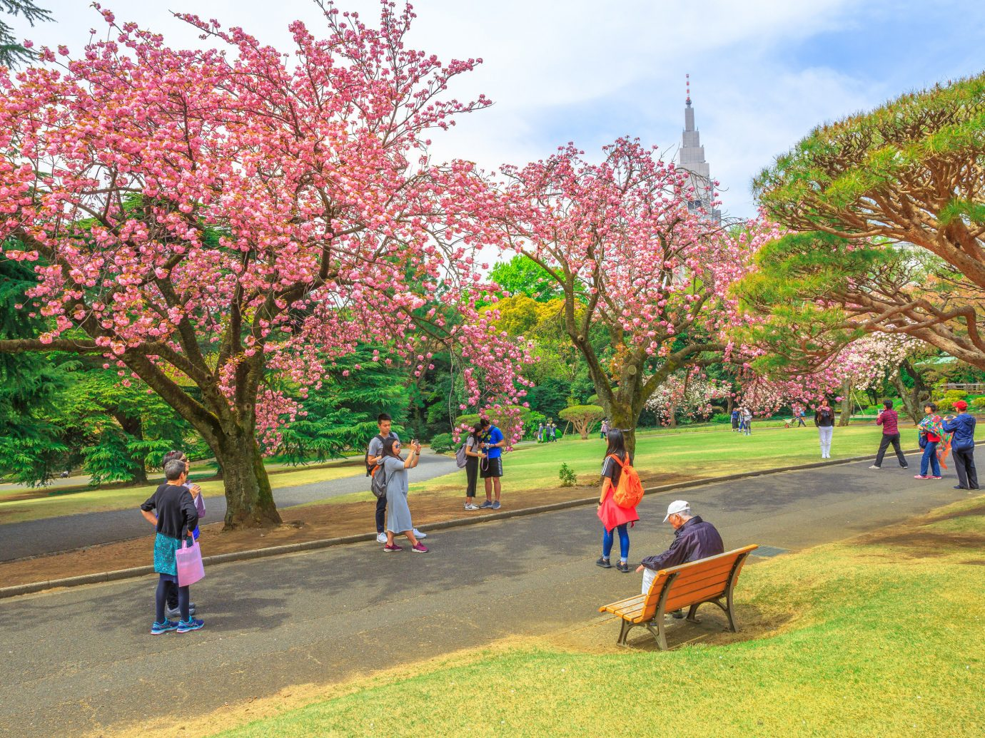 Japan Trip Ideas tree outdoor grass sky plant flower Nature spring woody plant park blossom cherry blossom leaf leisure recreation branch people City landscape