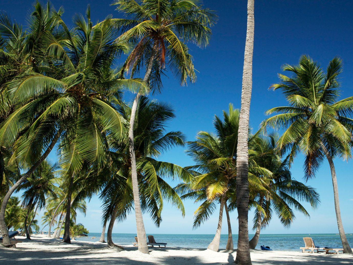 Beach Beachfront Luxury Play Resort Scenic views tree palm sky water plant palm family caribbean botany tropics Sea arecales woody plant Ocean land plant borassus flabellifer Coast lined flowering plant Island sandy shade