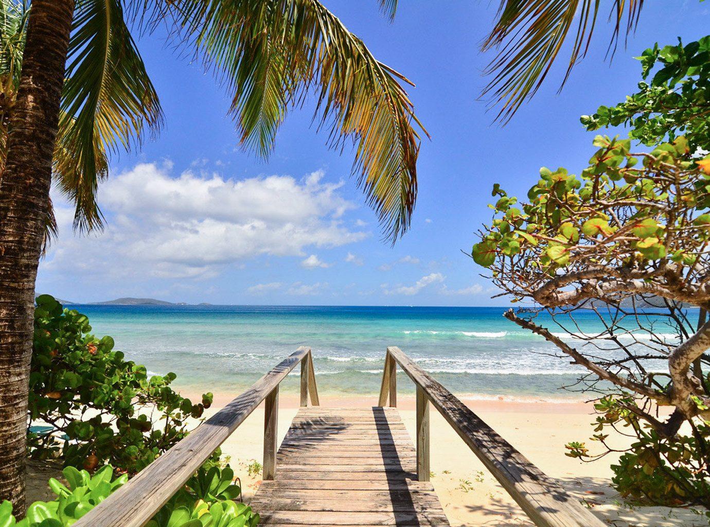 Beach Beachfront Luxury Ocean tree water sky palm plant caribbean tropics Sea Coast arecales Resort palm family Jungle overlooking lined shore sandy