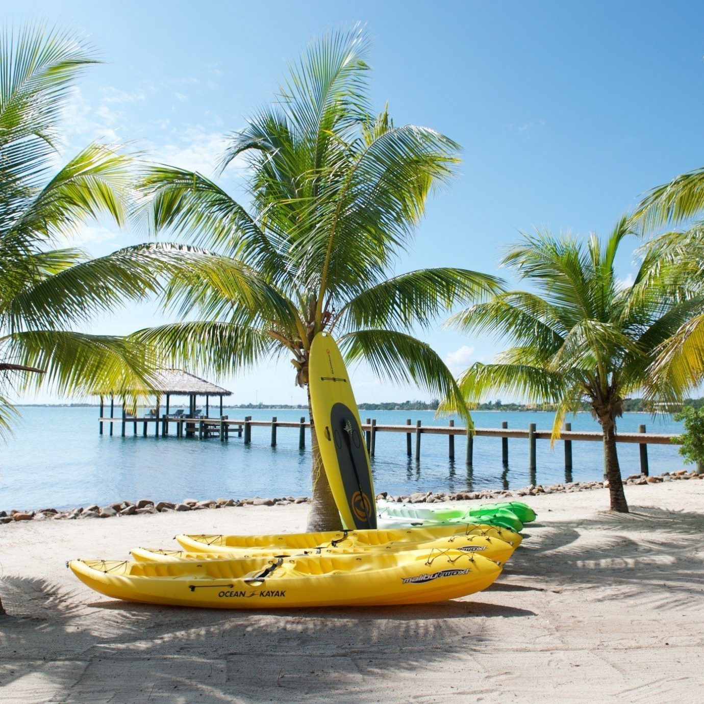 tree palm sky Beach palm family caribbean plant Resort tropics arecales woody plant Pool Sea sandy