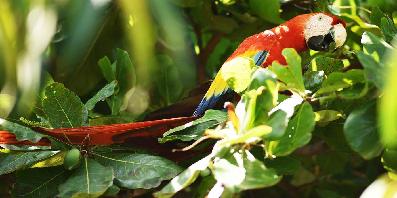 tree plant animal Nature green parrot flora Bird fauna red leaf botany flower Wildlife branch Jungle rainforest Garden tropics autumn macro photography colorful shrub colored