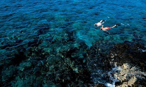 Outdoors + Adventure outdoor Sport water sport marine biology coral reef reef swimming underwater biology Sea Ocean sports coral