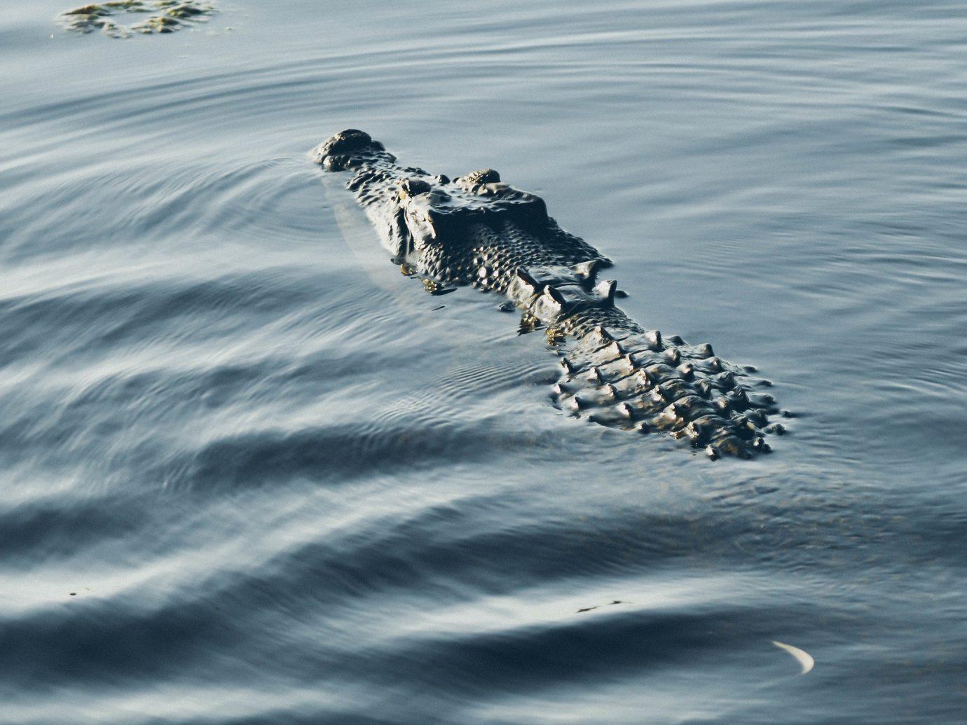 Trip Ideas water animal outdoor reptile Sea crocodilian reptile Ocean Coast wave