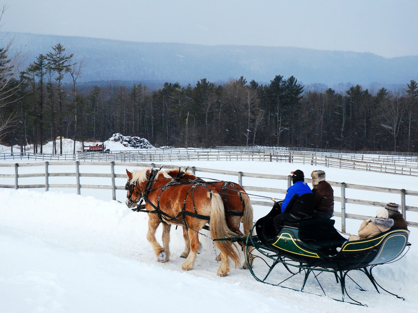 Boutique Hotels Romance Trip Ideas snow outdoor tree transport horse sky Winter sled horse harness sled dog racing mushing pulling carriage dog sled pack animal horse like mammal freezing ice drawn pulled