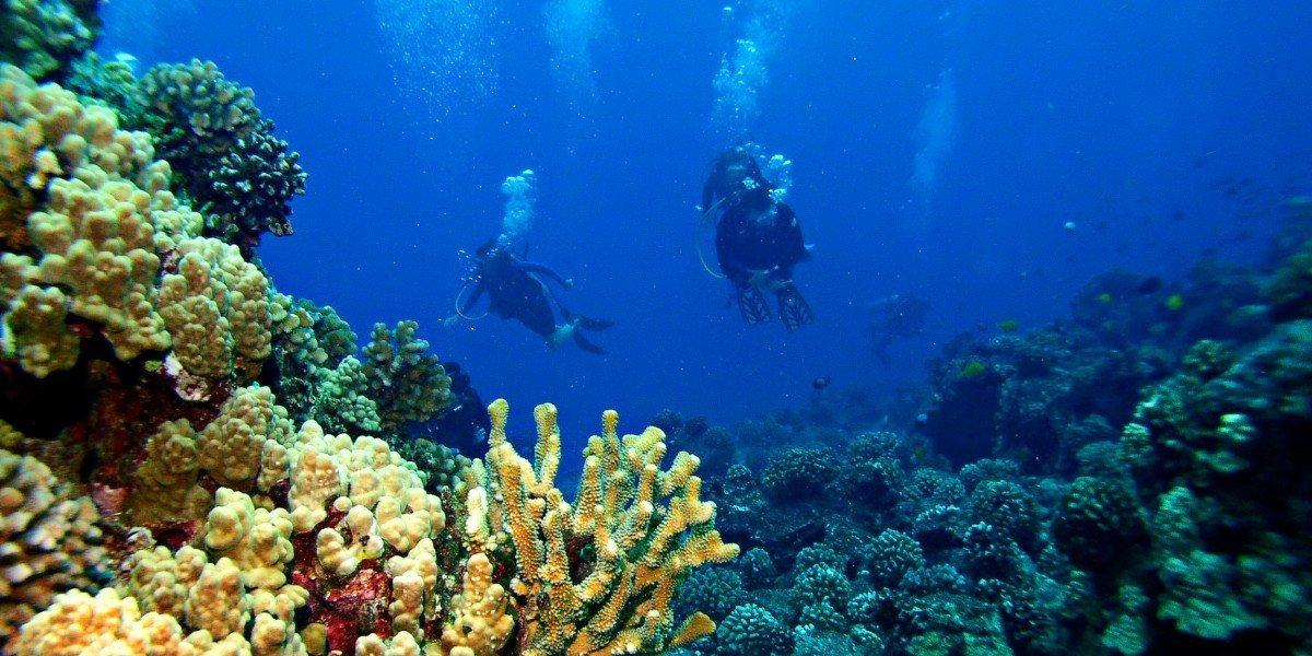 Trip Ideas habitat coral reef reef marine biology natural environment coral coral reef fish biology underwater Nature Scuba Diving underwater diving diving sports water sport swimming ocean floor