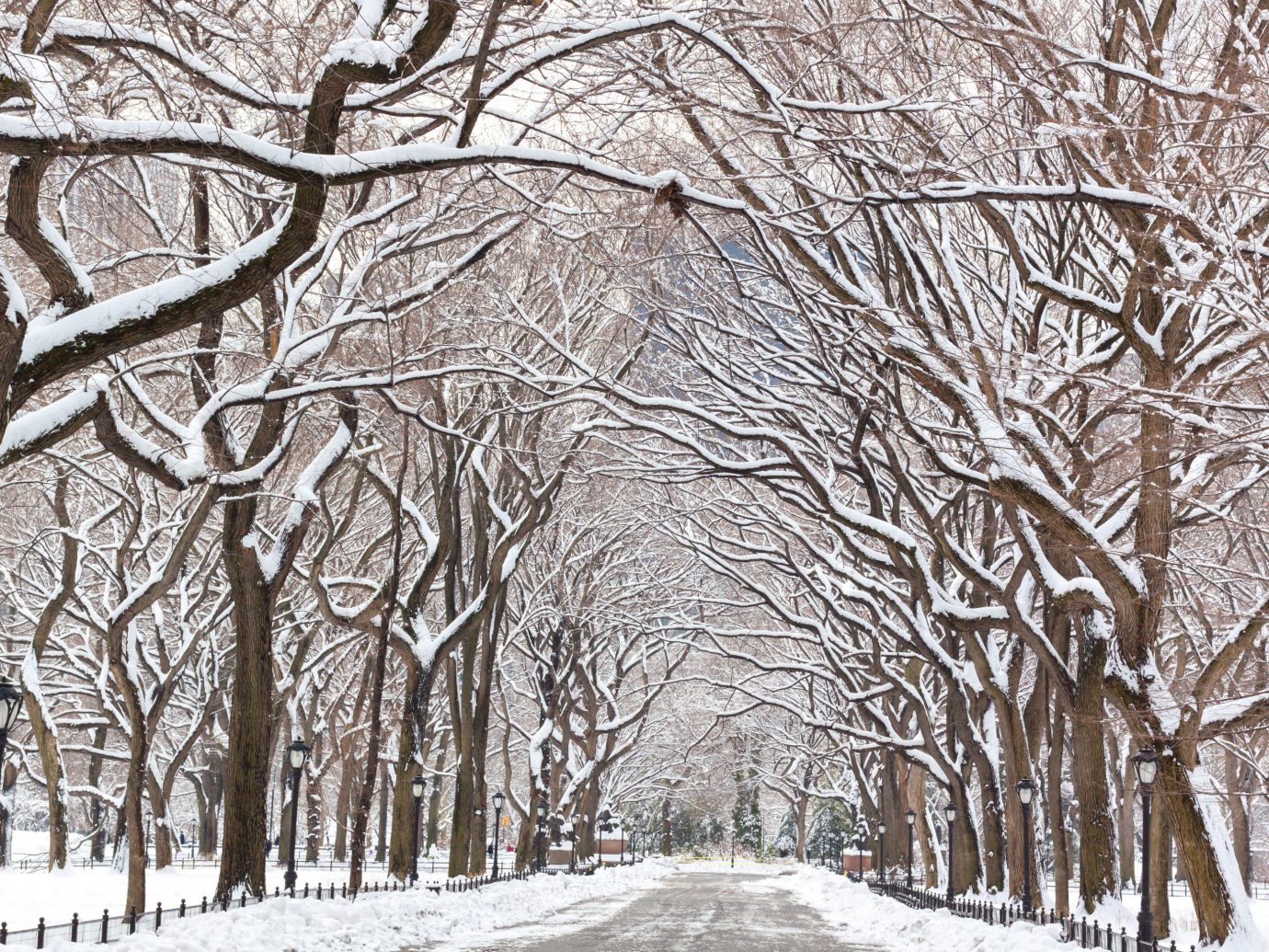 Trip Ideas tree snow outdoor Winter branch woody plant freezing black and white frost woodland monochrome grove blizzard plant day