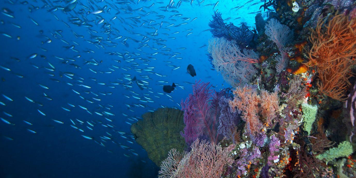 Trip Ideas habitat coral reef reef marine biology underwater coral coral reef fish natural environment biology Ocean Sea diving Scuba Diving water sport underwater diving fish surrounded
