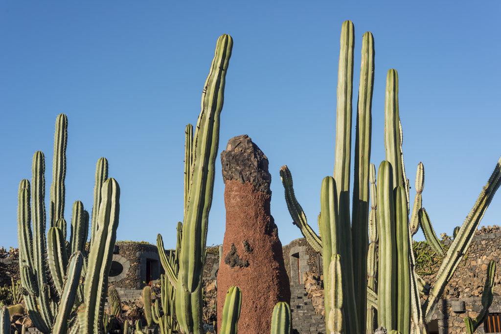 Offbeat Style + Design Travel Trends plant sky cactus flower hedgehog cactus grass family caryophyllales shrubland tree grass plant stem landscape