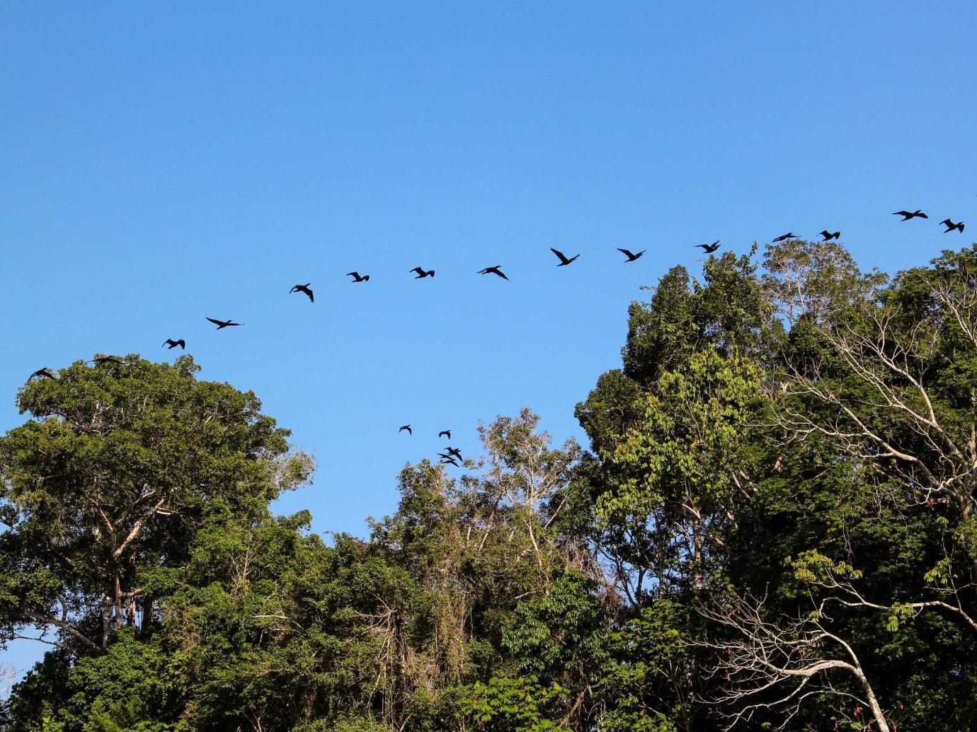 Cruise Travel Luxury Travel Outdoors + Adventure Trip Ideas tree outdoor Bird sky flock flora branch Wildlife plant