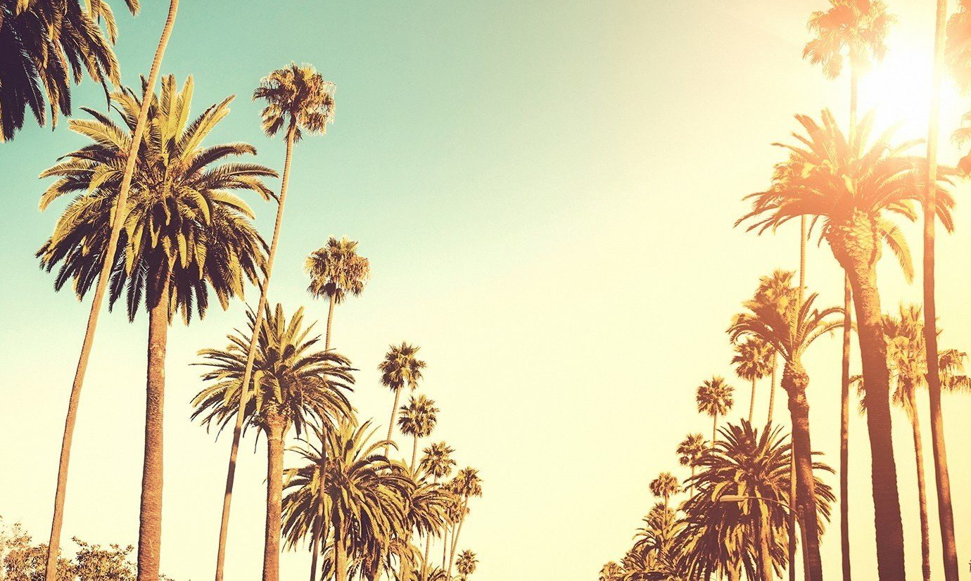 Jetsetter Guides Trip Ideas Weekend Getaways palm tree sky outdoor plant Beach palm family Sun sunlight morning arecales woody plant land plant leaf grass family branch autumn flowering plant flower shade sandy