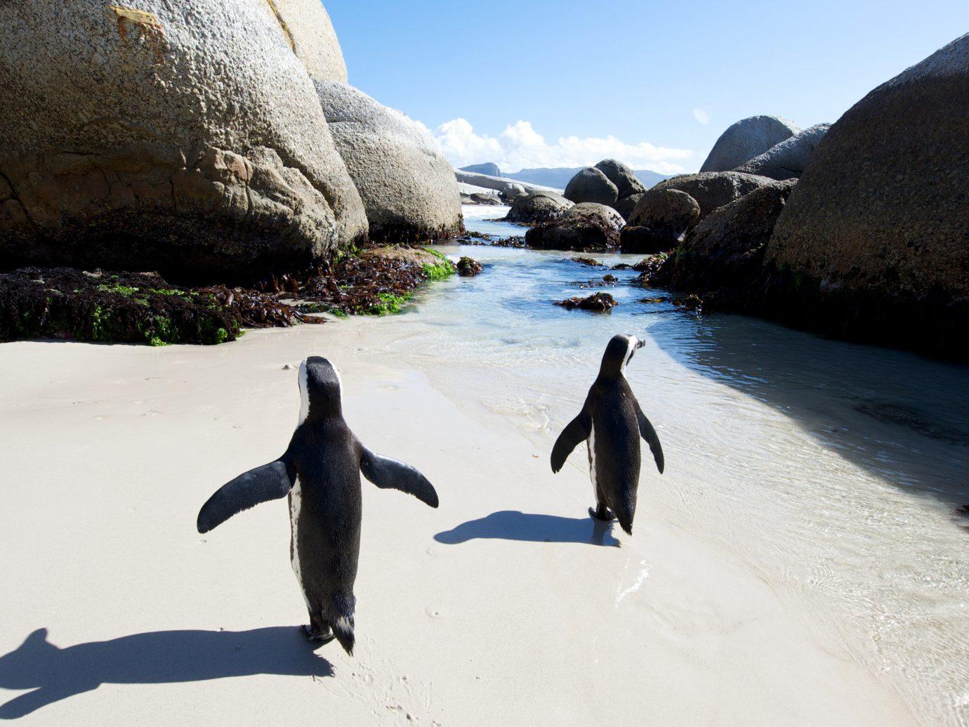 Trip Ideas outdoor sky water mountain rock Nature flightless bird penguin Sea Bird