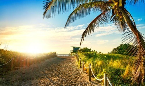 Trip Ideas tree outdoor sky palm plant Beach sunlight arecales morning savanna palm family agriculture Sunset sandy lined