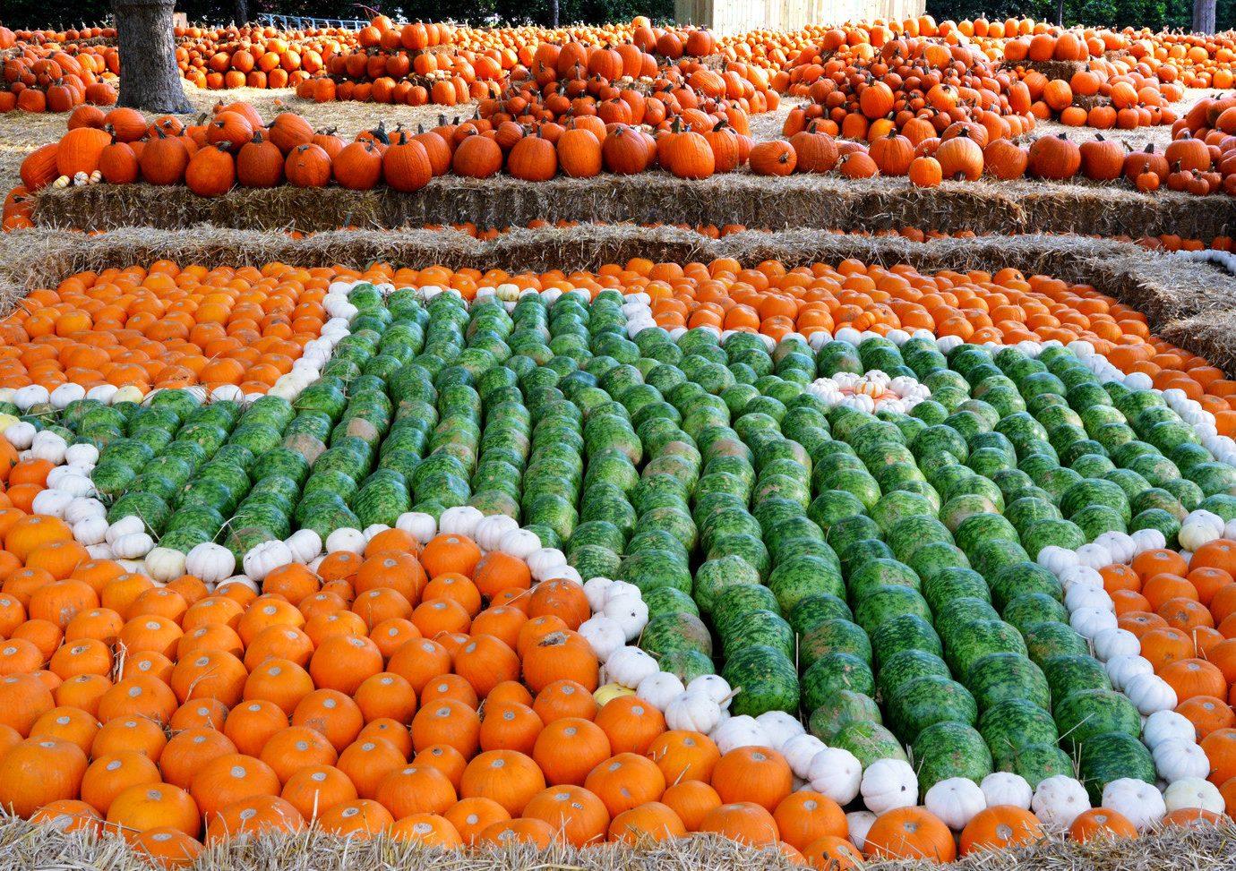 Trip Ideas City food public space produce human settlement orange vegetable greengrocer market flower pumpkin lined fresh