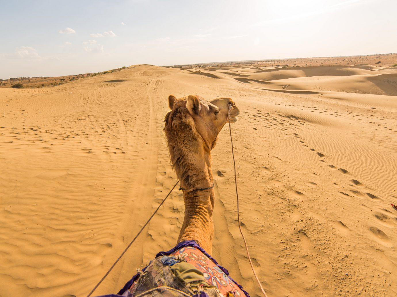 India Jaipur Jodhpur Trip Ideas Desert erg sahara sand aeolian landform landscape singing sand dune arabian camel ecoregion Camel sky vacation wadi camel like mammal