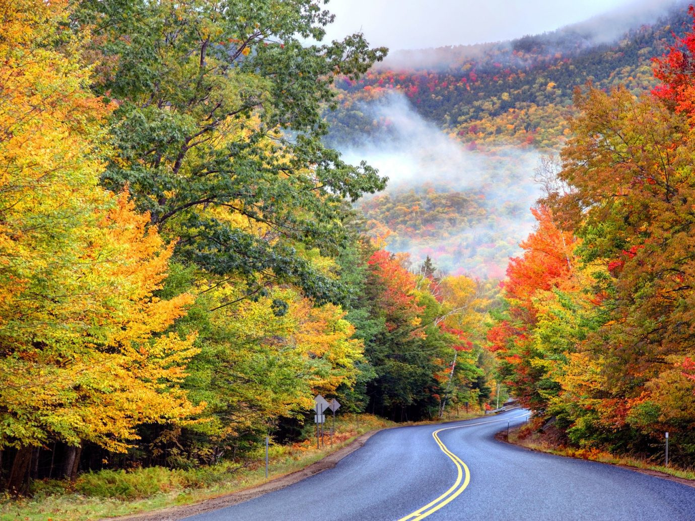 Road Trips Trip Ideas tree outdoor grass autumn season leaf way Forest plant scene woody plant traveling landscape woodland coming flower wooded moving road bushes surrounded