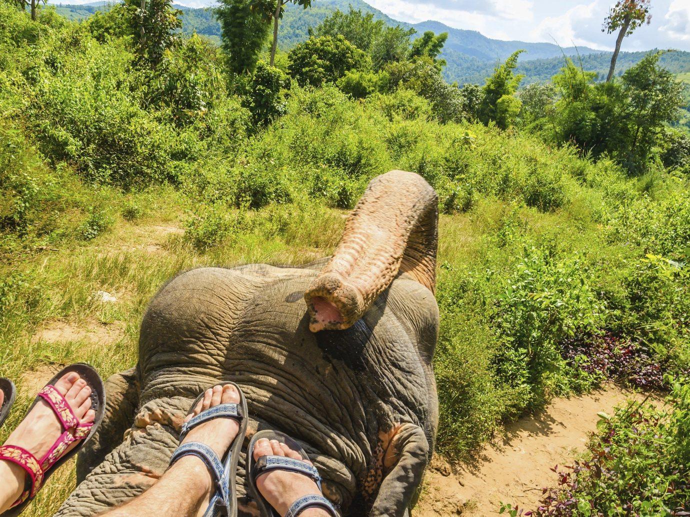 Trip Ideas tree outdoor habitat man elephant wilderness natural environment Wildlife Jungle Forest Adventure rainforest Safari
