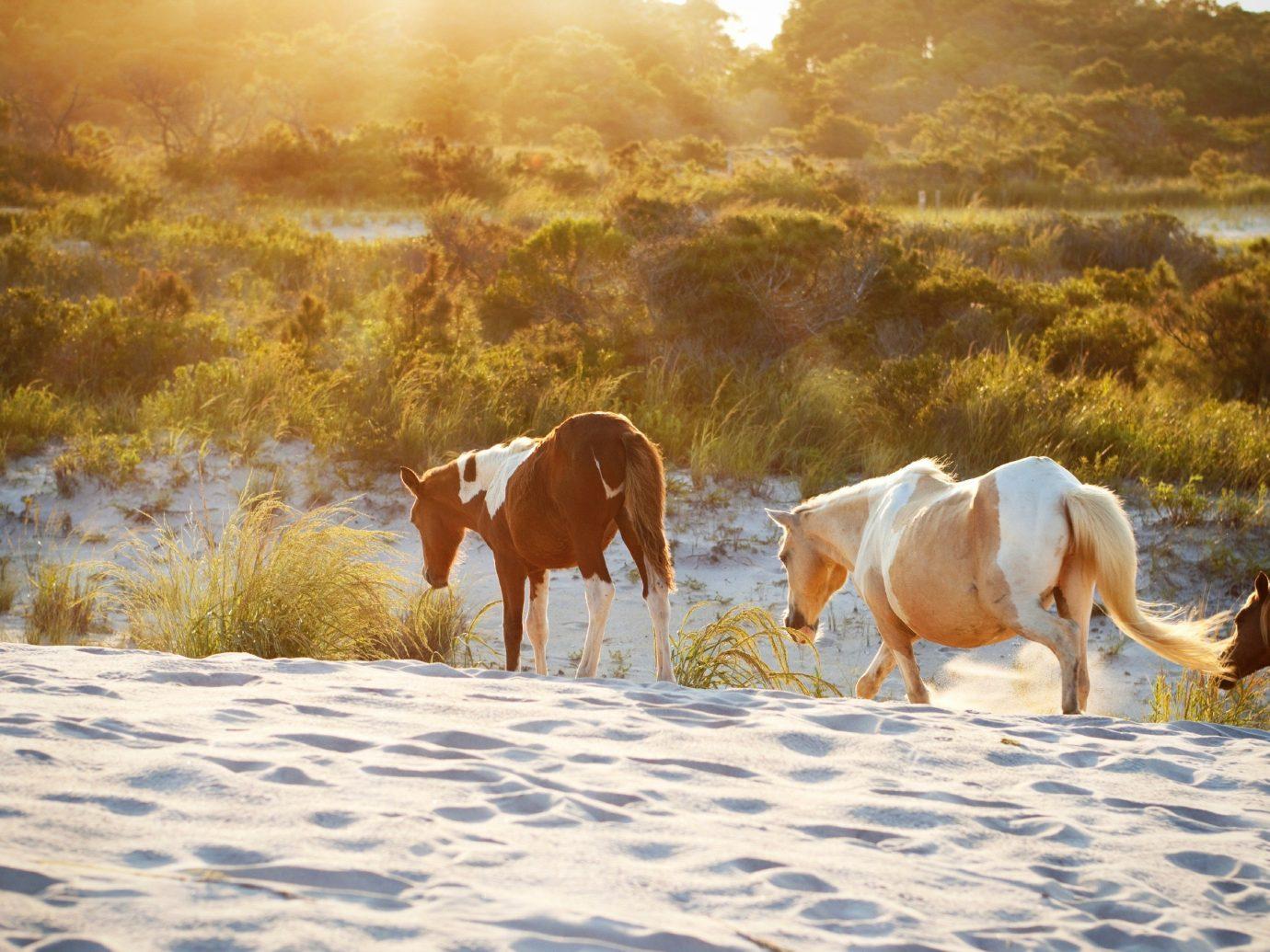 Trip Ideas outdoor horse habitat pasture herd natural environment grassland mustang horse mammal grazing season morning steppe landscape mare meadow horse like mammal bovine cattle like mammal
