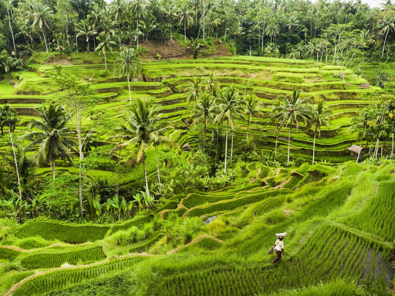 Jetsetter Guides grass outdoor tree field Terrace paddy field vegetation geographical feature agriculture green plantation ecosystem botany landscape Nature plant rural area Garden soil botanical garden Jungle plateau pasture lush