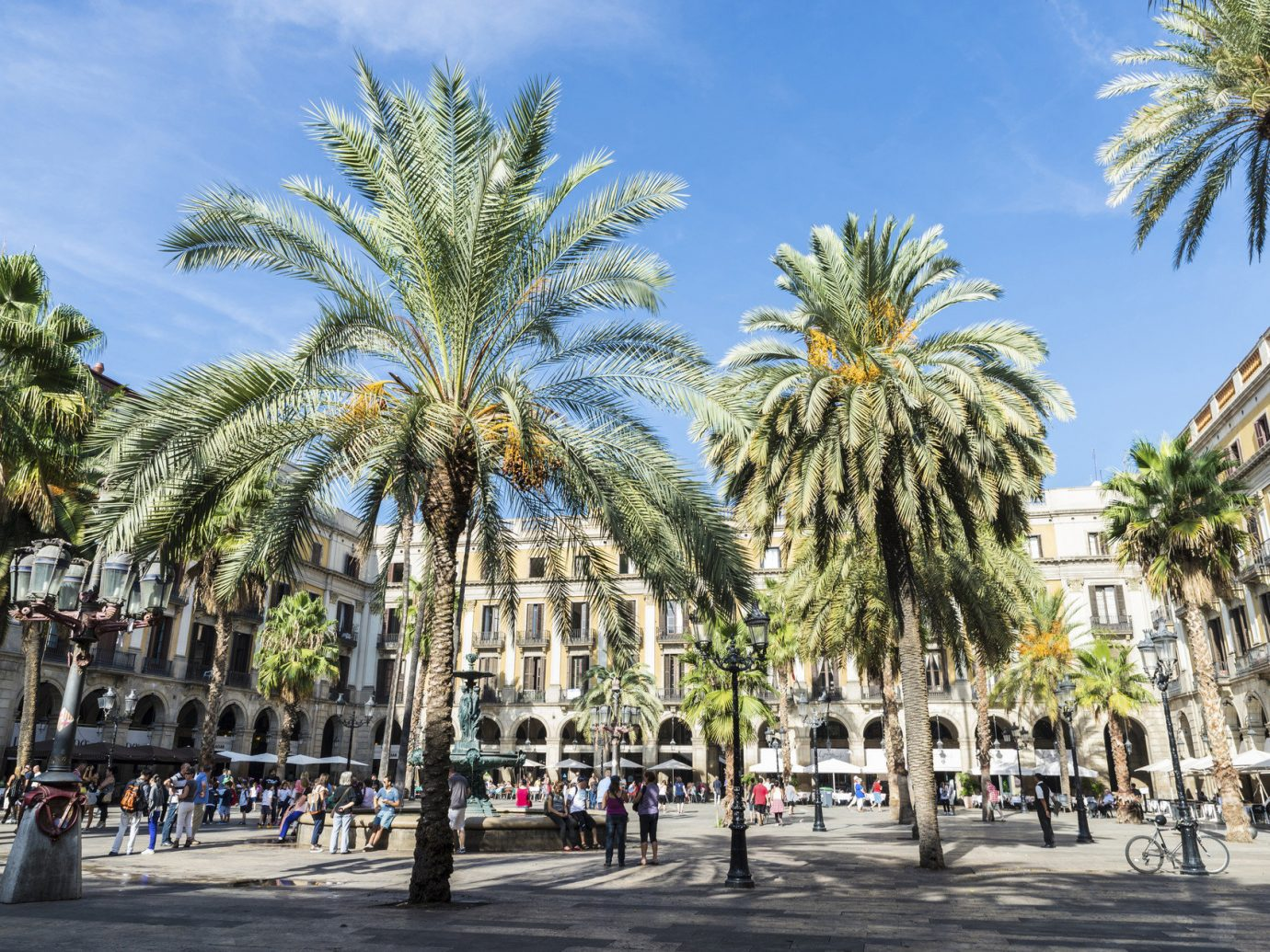 News Trip Ideas tree outdoor road sky plant palm palm family street botany plaza vacation arecales woody plant land plant date palm tourism borassus flabellifer walkway town square park flower flowering plant lined square Resort