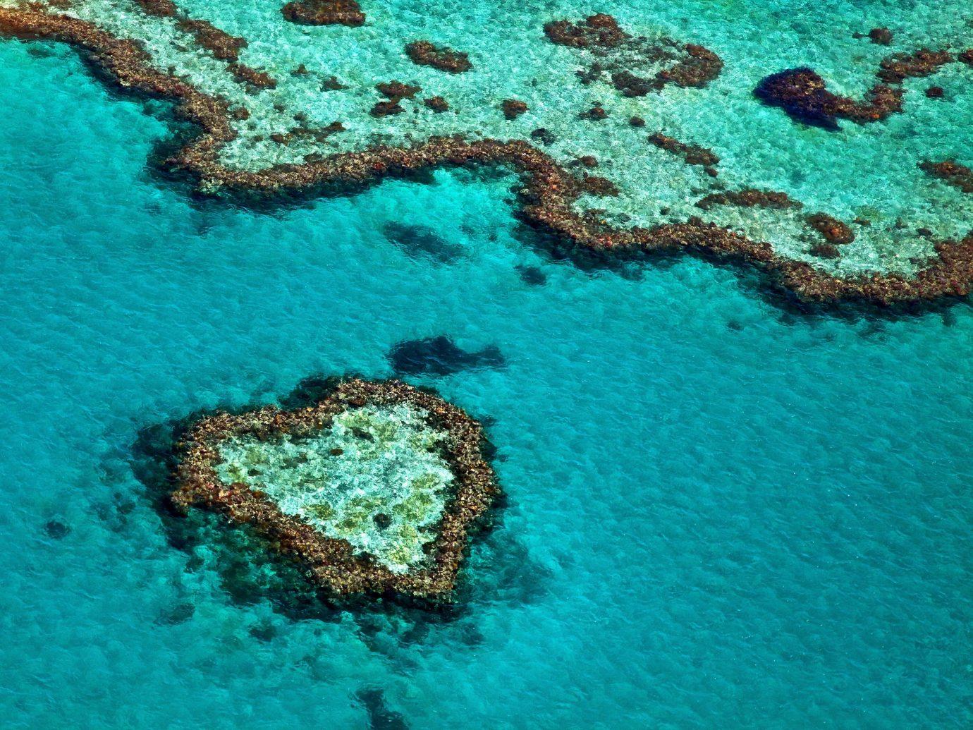Trip Ideas reef green landform marine biology coral ecosystem coral reef biology Sea underwater swimming ocean floor