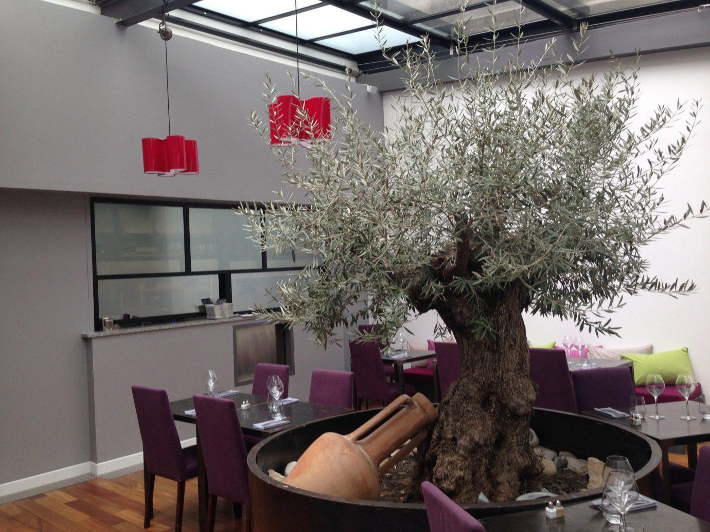 Road Trips Trip Ideas indoor interior design ceiling houseplant plant window interior designer dining table
