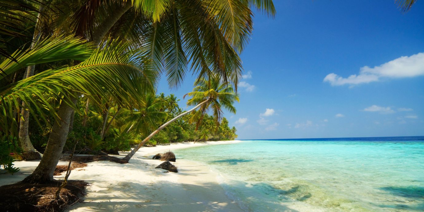 Trip Ideas tree outdoor water sky palm plant geographical feature Beach caribbean body of water Ocean tropics Sea vacation arecales Coast Nature palm family Lagoon bay shore Island cape sunny sandy