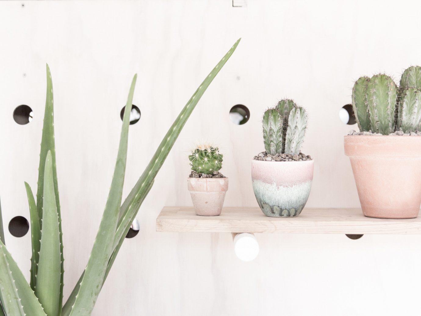 Offbeat Style + Design Travel Trends plant flowerpot vase cactus product design flower several