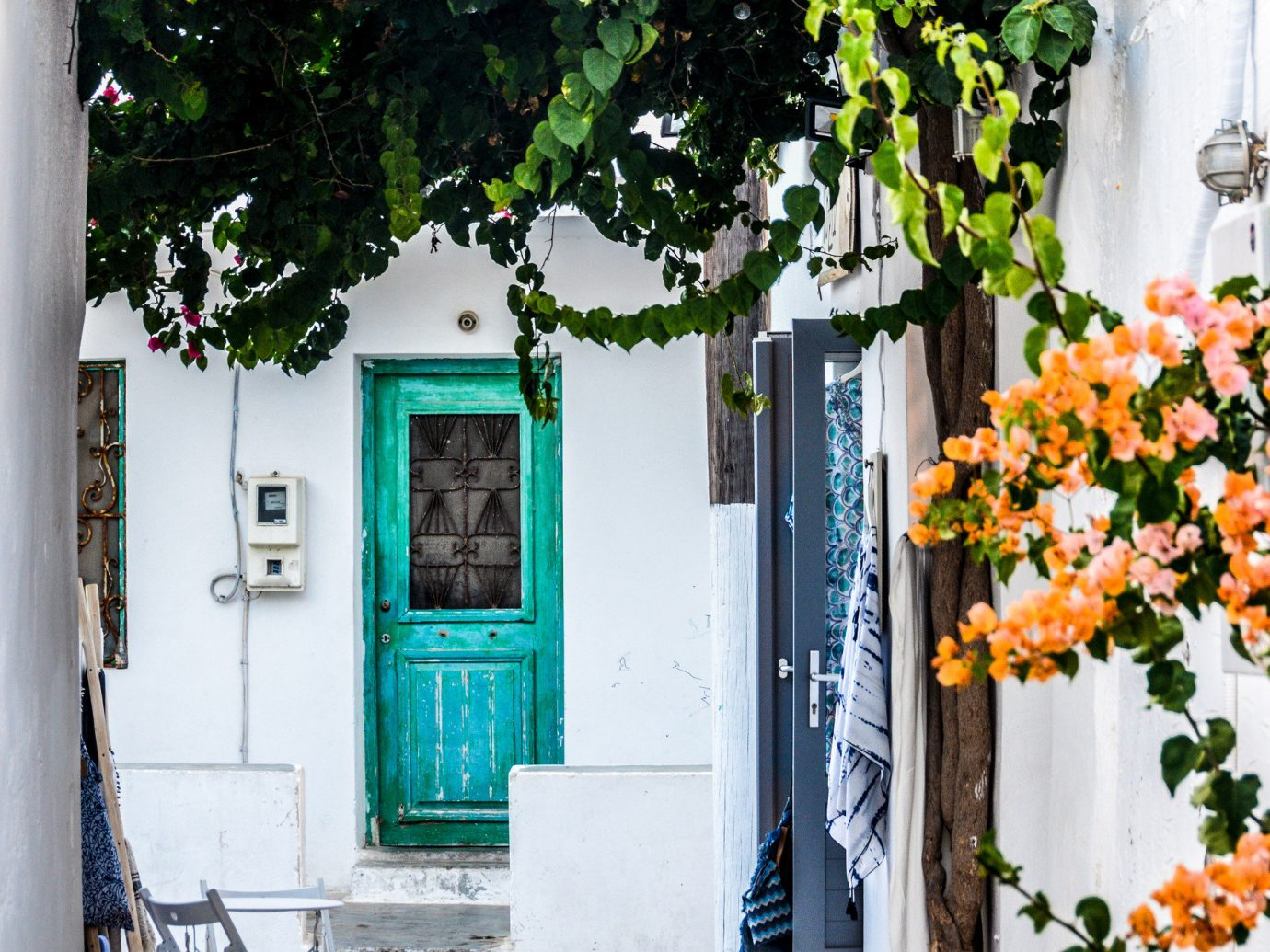 Offbeat color outdoor green house neighbourhood urban area street season flower home spring cottage window porch