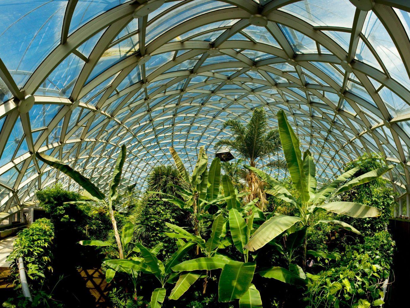 Offbeat plant Garden greenhouse botany flower arecales outdoor structure tropics Jungle botanical garden