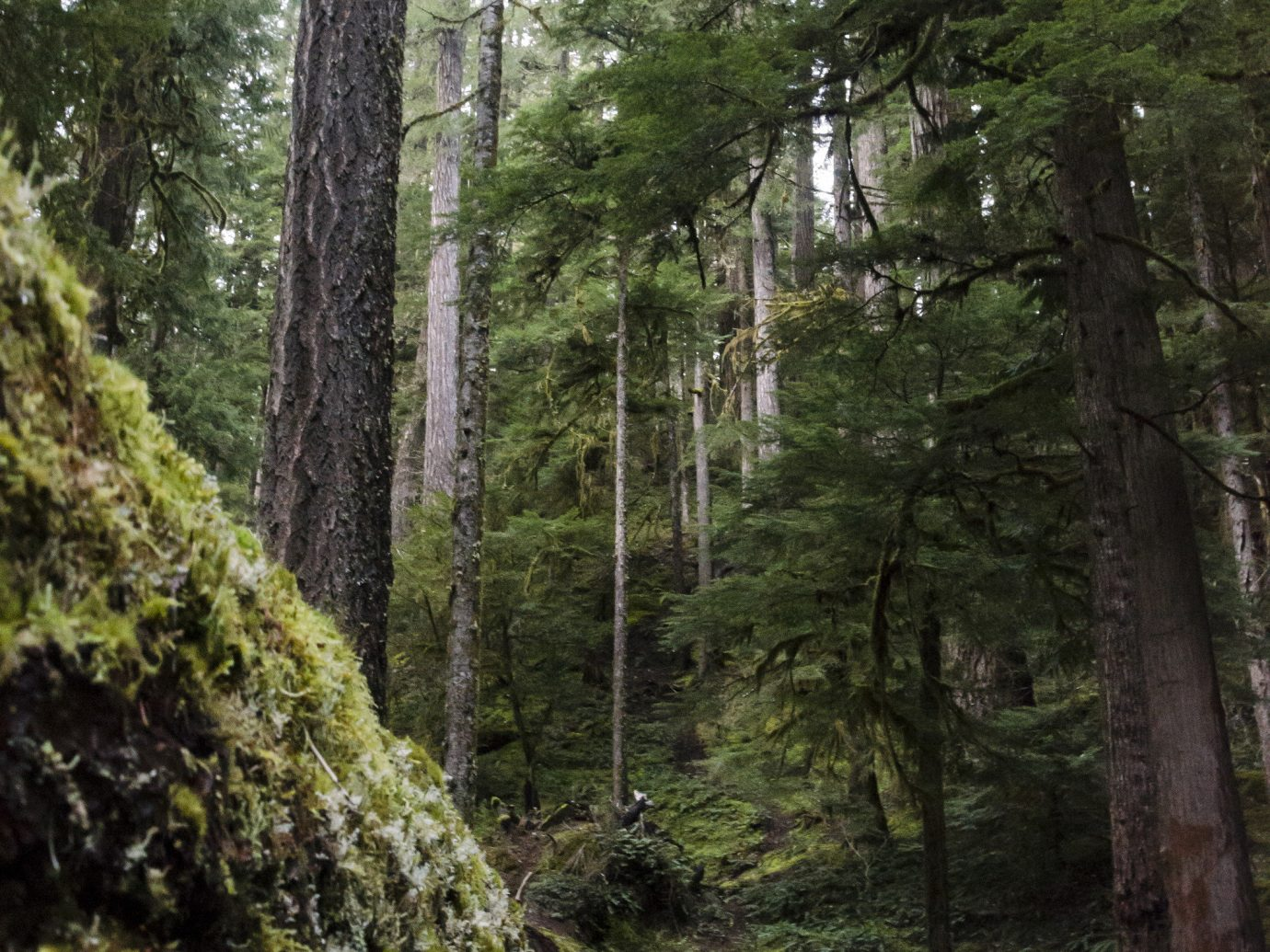 Scenic views Travel Tips tree outdoor habitat wilderness natural environment ecosystem Forest wood woodland woody plant old growth forest trail mountain plant rainforest walking wooded area surrounded