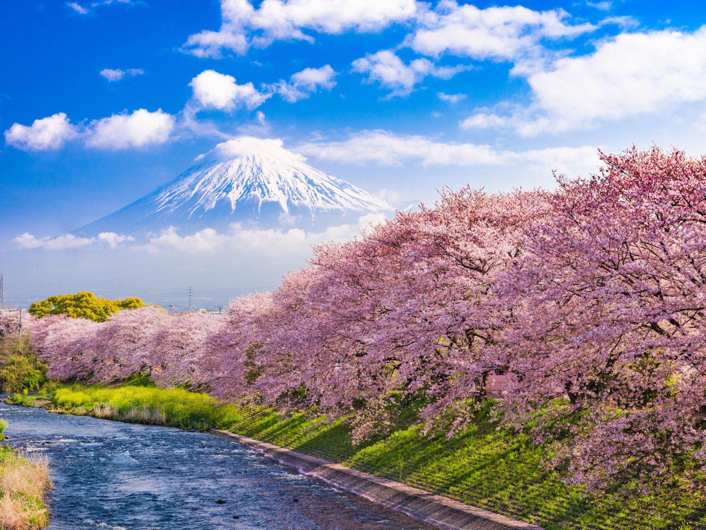 Japan Trip Ideas flower sky plant cherry blossom tree blossom spring mountain cloud mount scenery landscape national park computer wallpaper