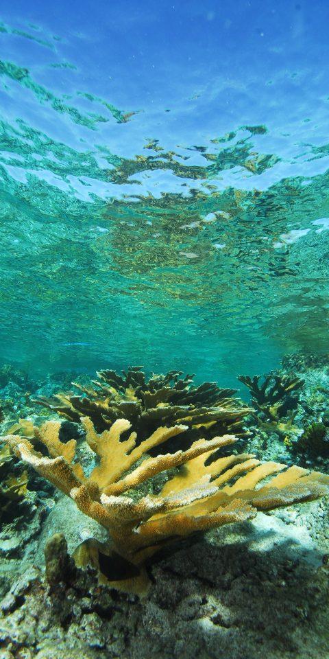 Trip Ideas grass coral reef underwater ecosystem marine biology reef outdoor coral Nature organism water stony coral Sea marine invertebrates Wildlife Ocean fish coral reef fish lush ocean floor