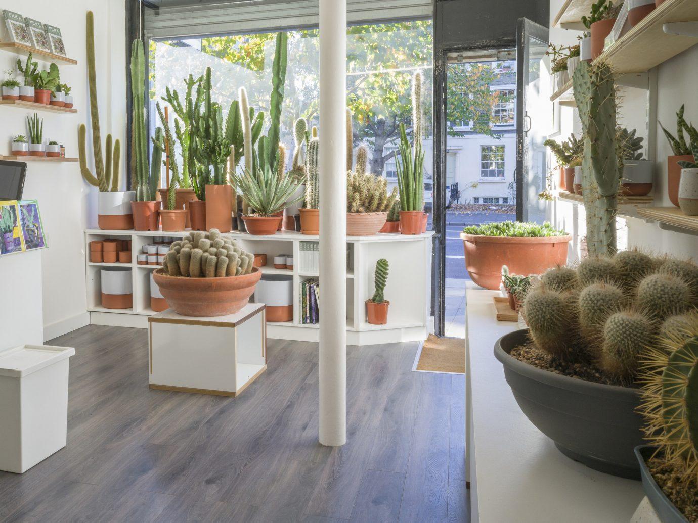 Offbeat Style + Design Travel Trends plant indoor floor cactus interior design flowerpot agave real estate houseplant living room furniture flowering plant tub