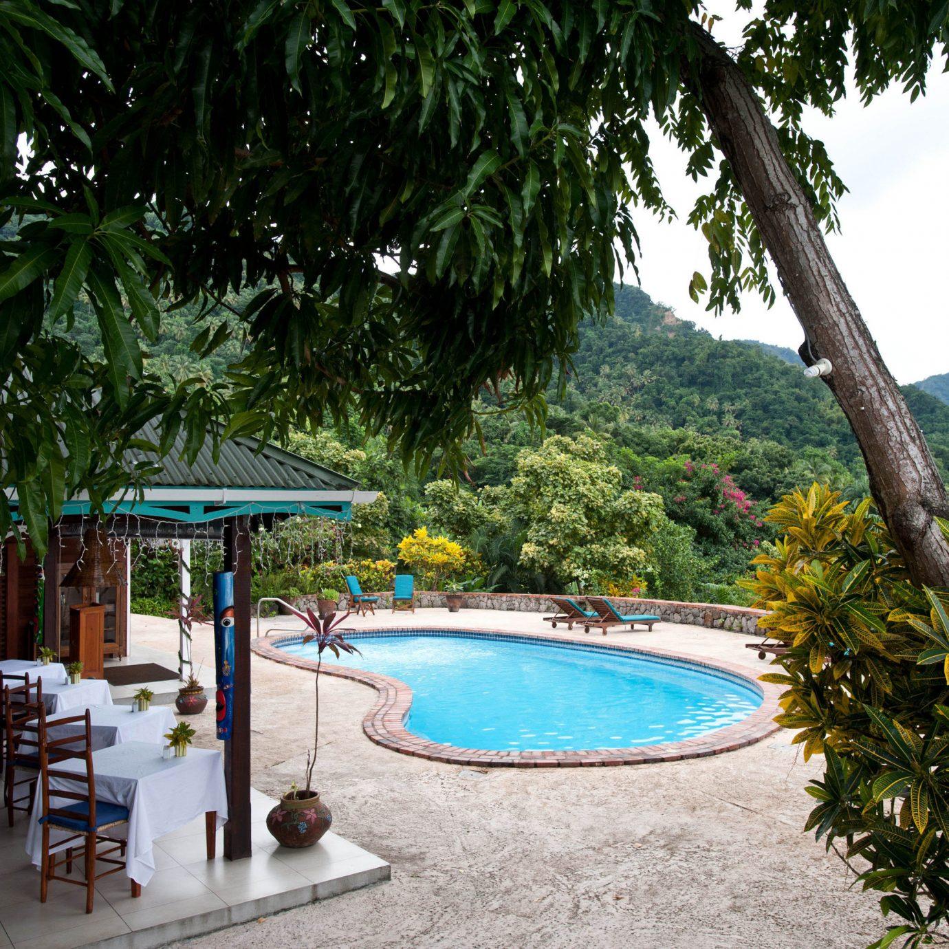 tree leisure swimming pool Resort palm backyard tropics Villa Pool Jungle lined plant shade