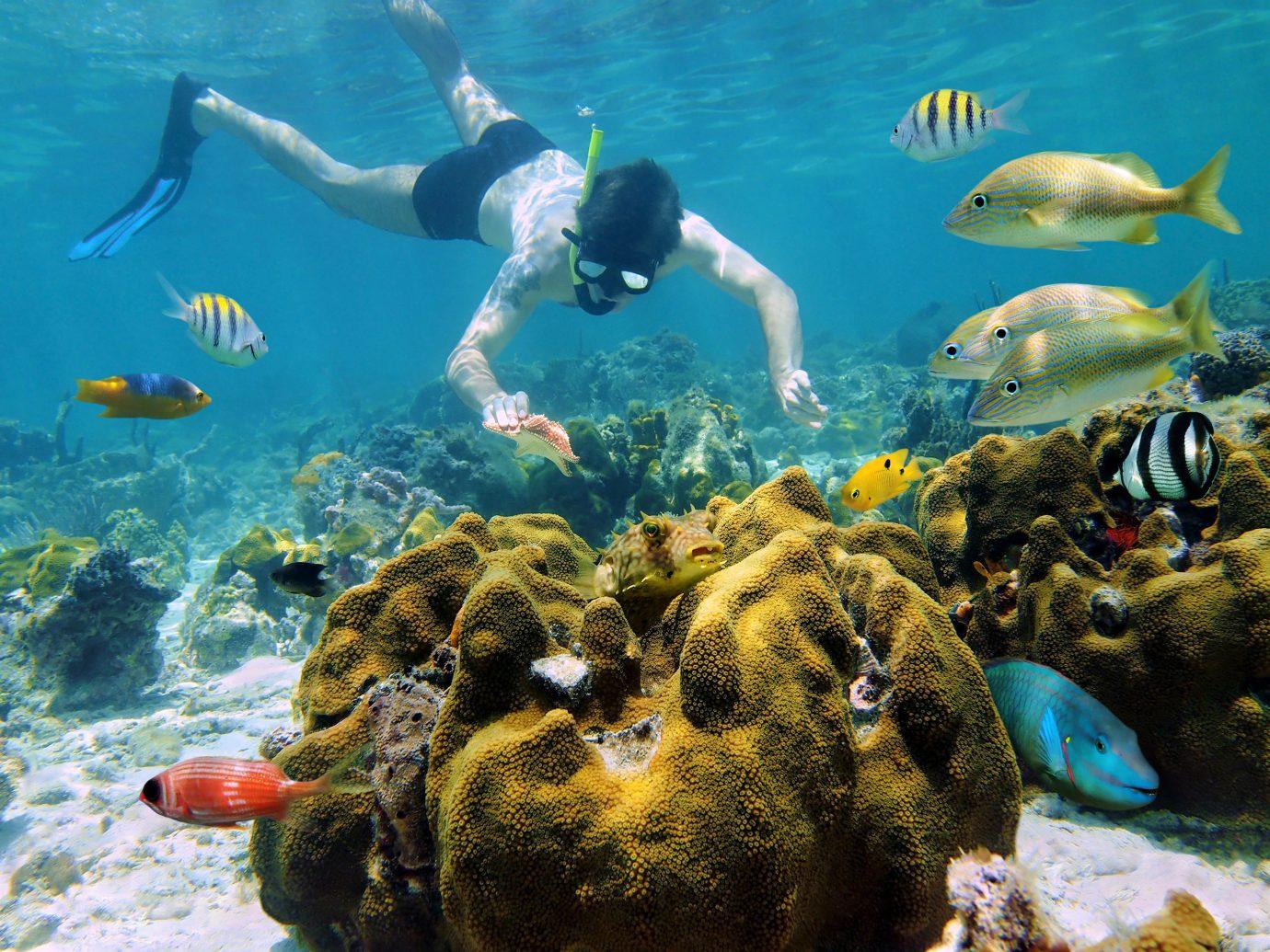 Mexico Trip Ideas Weekend Getaways coral reef water underwater ecosystem marine biology coral reef fish Sea reef organism coral swimming Ocean aquanaut divemaster coastal and oceanic landforms snorkeling marine invertebrates fish stony coral shoal