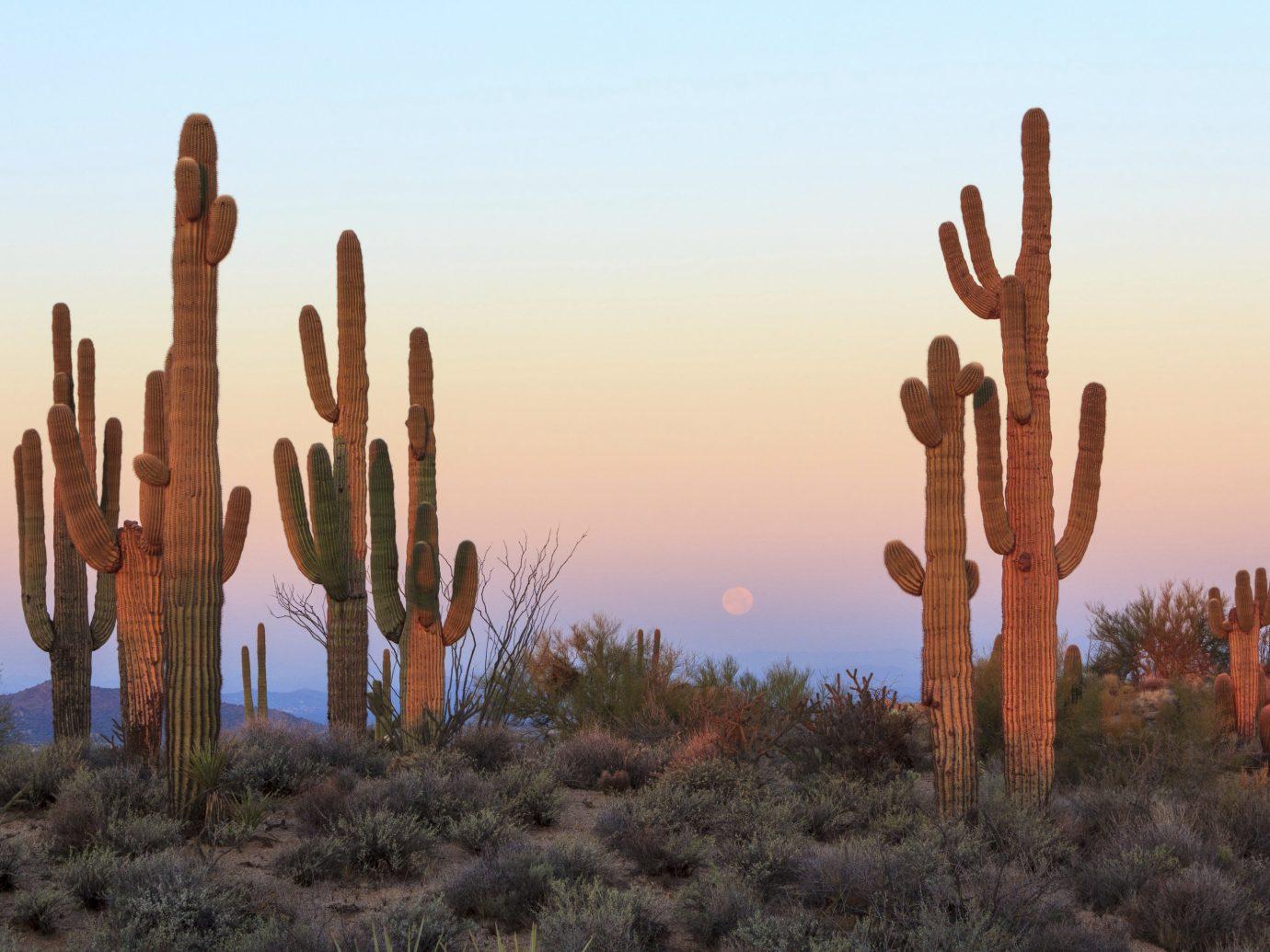 Health + Wellness Hotels Yoga Retreats plant cactus sky outdoor Desert natural environment aeolian landform land plant flowering plant grass family landscape field flower caryophyllales Sunset sand several