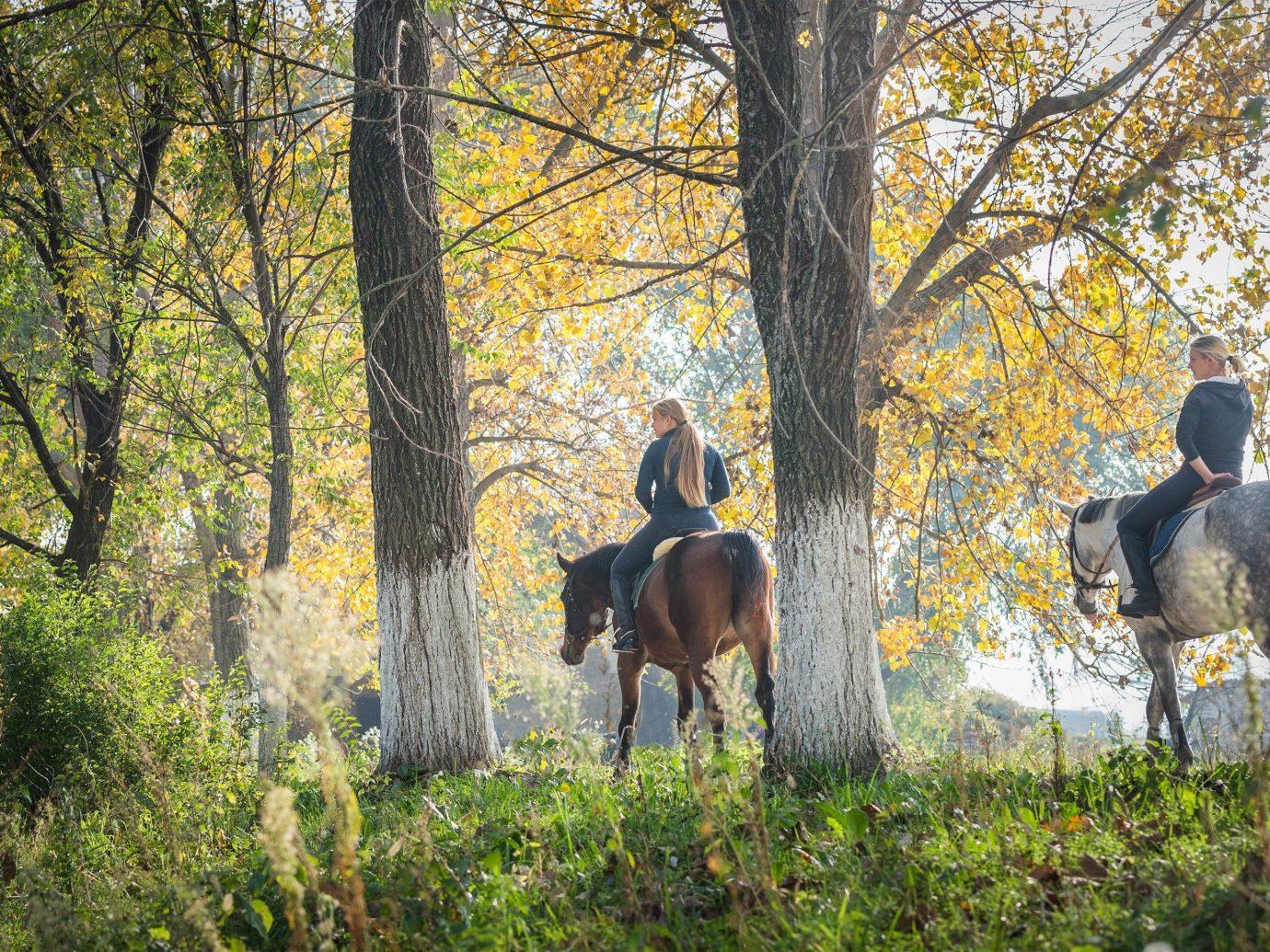 People riding horses in Park City, Utah